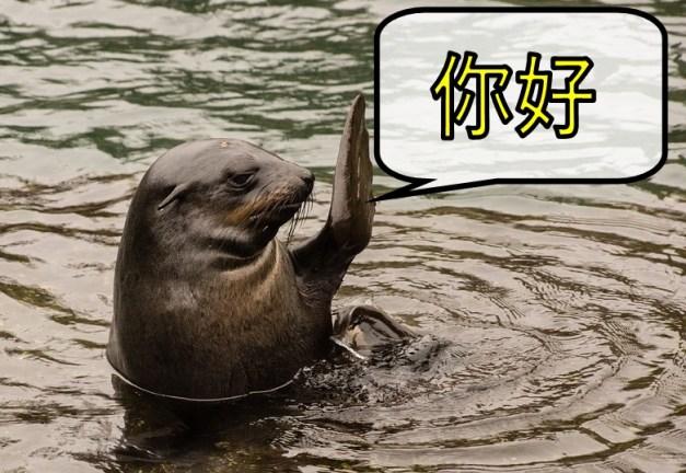 中国語こんにちは