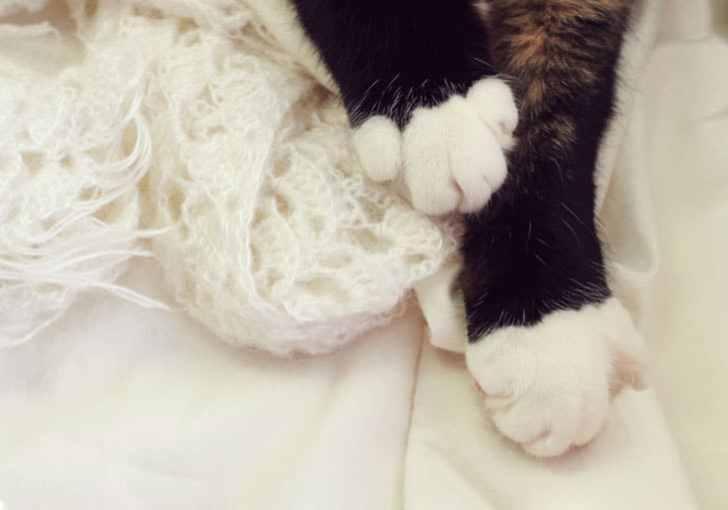 ハチワレ子猫ちゃんのホワイトソックス