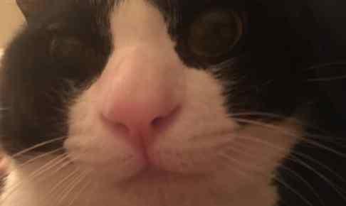 うちの白黒タキシードのハチワレ猫ちゃんの画像20選