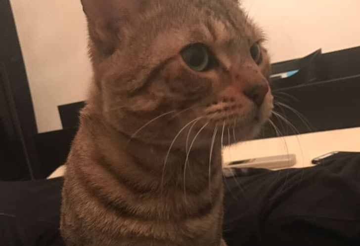キジトラ猫 アップ写真