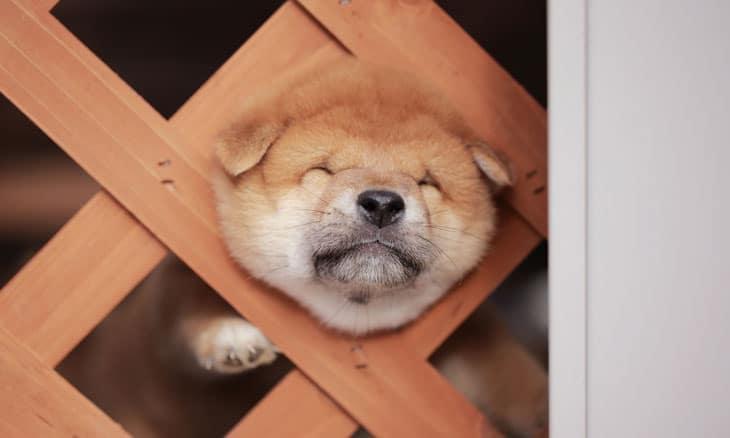柵にはまるかわいい子犬
