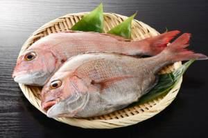 【英語】これだけは知っておくべき魚・水の生物の名前一覧