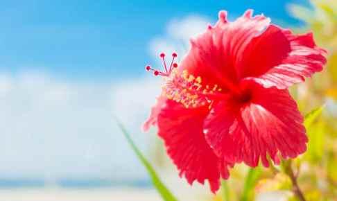 【保存版】死ぬまでに行ってみたい沖縄本島の絶景ビーチ10選