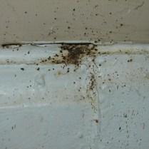 Fecal Spots