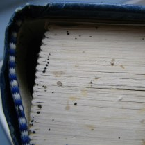 bed bug egg and feces on book