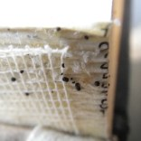 bed bug eggs and feces in book binding