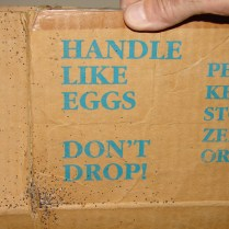 bed bug eggs and feces on cardboard box
