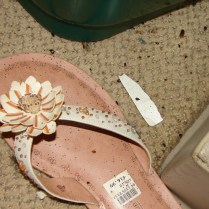 bed bugs and feces on woman's sandal