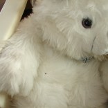 bed bugs on toy bear
