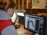 Digitizing plant specimen