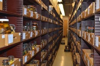 Shelves with specimens