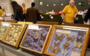 Chuck Triplehorn and some of the displays of the Triplehorn Insect Collection. 2008