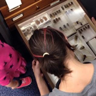 Sarah Washburn examining drawer of cicadas.