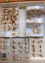 Inside of a moth voucher box 2