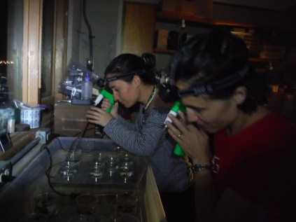 Andrea Grottoli and Kerri Dobson measuring coral feeding rates