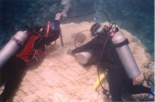 Andrea and Olivia coral drilling, Saipan