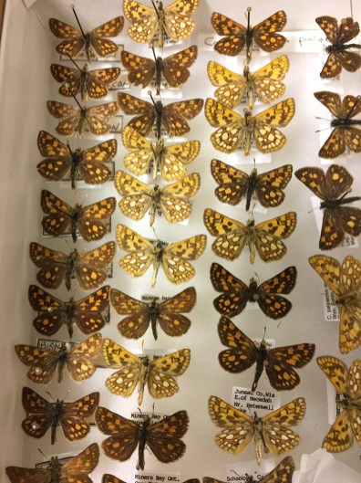 Unit tray containing skipper butterflies