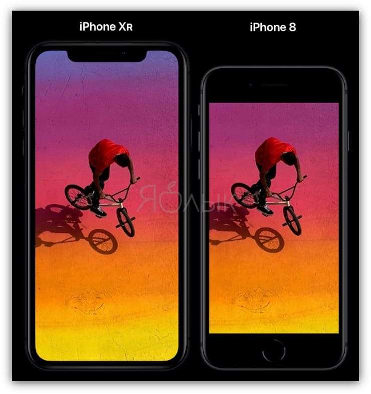 IPhone XR and iPhone 8 size comparison