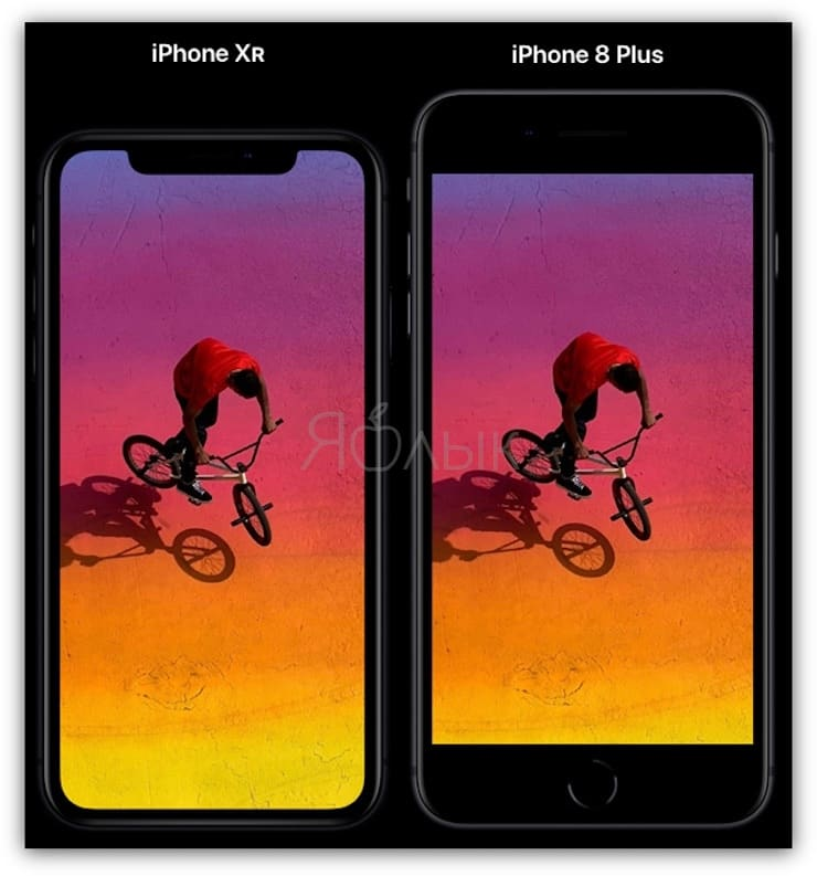 IPhone XR and iPhone 8 Plus Size Comparison
