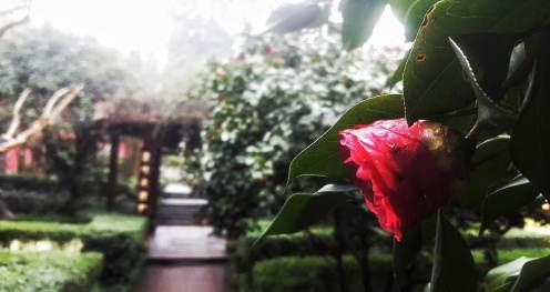 garden in the temple