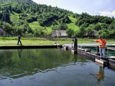 Картинки по запросу форелевый ставок Закарпатье
