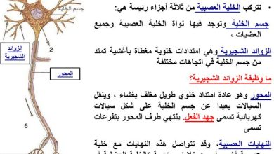 Photo of صف عاشر فصل ثاني أحياء تلخيص الجهاز العصبي