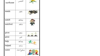 Photo of صف ثالث فصل ثاني مفردات الدروس 13-14-15-16 من الوحدة الخامسة لغة إنجليزية