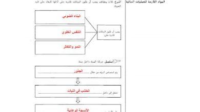 Photo of حل دليل الأنشطة علوم وحدة العمليات النباتية وتكاثر النبات صف سابع فصل ثاني