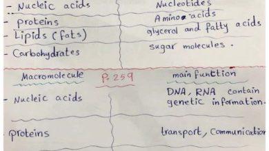 Photo of صف سادس فصل ثاني حلول أسئلة درس الخلية علوم منهج