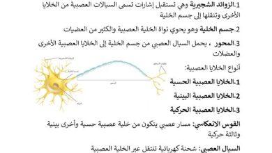 Photo of ملخص تركيب الجهاز العصبي أحياء صف ثاني عشر فصل ثالث