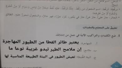 حل درس طائر القطا للصف السابع لغة عربية