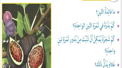 حل درس سورة التين التربية الاسلامية الصف الثالث