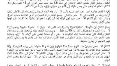 Photo of مهارات القراءة نص الكنغر لغة عربية صف رابع فصل ثاني