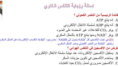Photo of أسئلة مراجعة التنفس الخلوي أحياء مع الحلول صف حادي عشر متقدم فصل ثالث