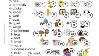 Photo of مفردات الوحدة السادسة لغة إنجليزية صف ثالث فصل ثاني