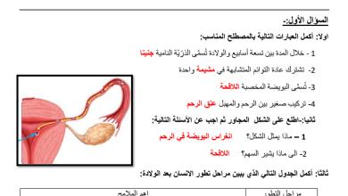 Photo of مراجعة درس نمو الإنسان وتطوره مع الإجابات علوم صف ثامن
