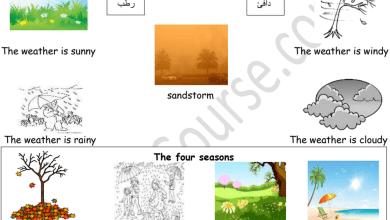 Photo of اوراق عمل شاملة ومميزة للوحدة الثامنة لغة انكليزية صف أول فصل ثالث