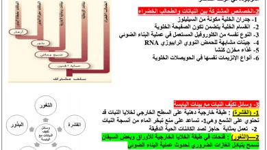 Photo of مراجعة احياء صف حادي عشر فصل ثالث
