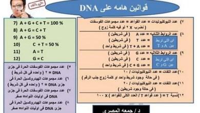 Photo of قوانين لحل مسائل DNA و RNA أحياء صف تاسع متقدم