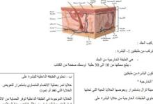 Photo of ملخص الجهاز الغشائي أحياء صف ثاني عشر عام فصل ثاني