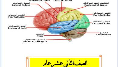 Photo of ملخص الجهاز العصبي أحياء صف ثاني عشر عام فصل ثاني