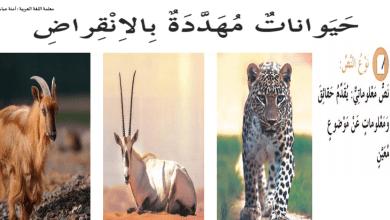 Photo of حل درس حيوانات مهددة بالإنقراض لغة عربية صف سابع فصل ثاني