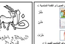 Photo of ورق عمل حرف الكاف لغة عربية صف أول فصل ثاني