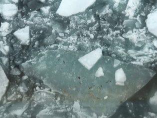 Algae on the ice.