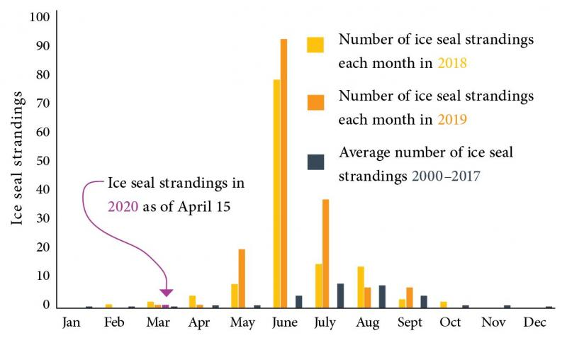 graph of ice seal strandings