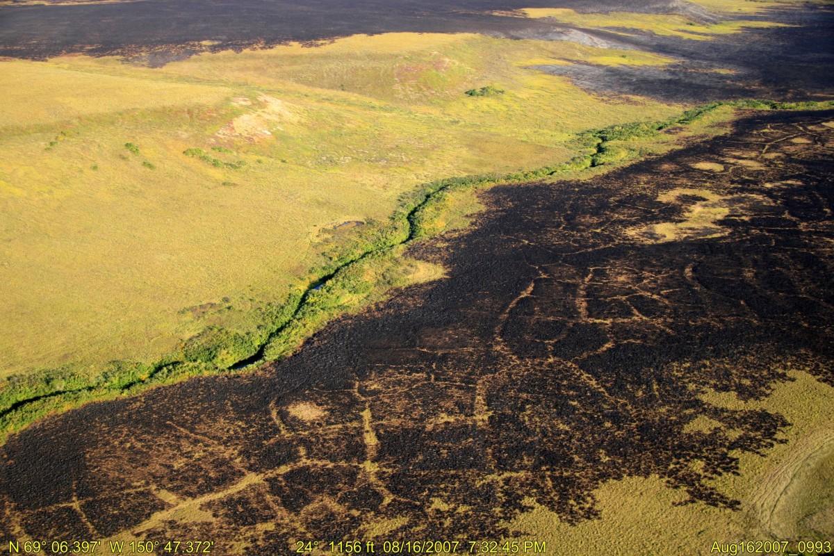 burned ground