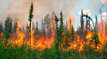 fire in the boreal forest