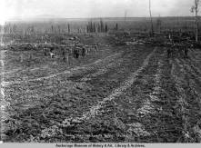 Potato field, Manley Hot Springs, Alaska. Photo credit: AMRC-b01-41-160, O.D. Goetze Collection.