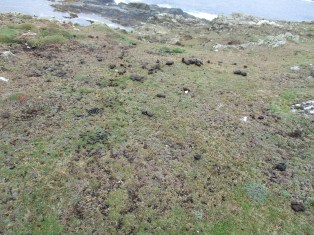 The poop-covered path at Inishboffin