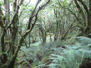 Forests at the Burren